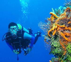 Vallarta Scuba Dive
